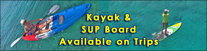 SUP board and Kayak Available on Swimming Trips