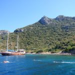 Swim-Vacation-Cruise