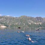 Kotor-Bay-Fjord-Swimming