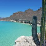Cactus-Mexico-Baja
