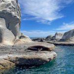 Sea-Lion-Coronado-Island-Mexico