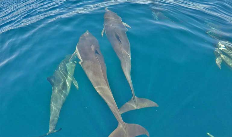 Swimming-With-Dolphins-Mexico